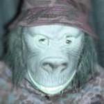 Ape Lincoln aus Affstätt