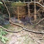 """Völlig misslungenes """"Getarnt-im-Wald-liegen""""-Bild"""